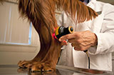 Laser Therapy for Animals